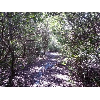 Продажа острова Everglades Escape Private Island USA