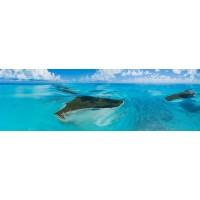 Hummingbird Cay Private Island Bahamas