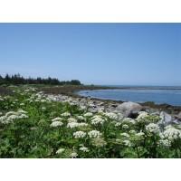 Mutton Private Island Nova Scotia