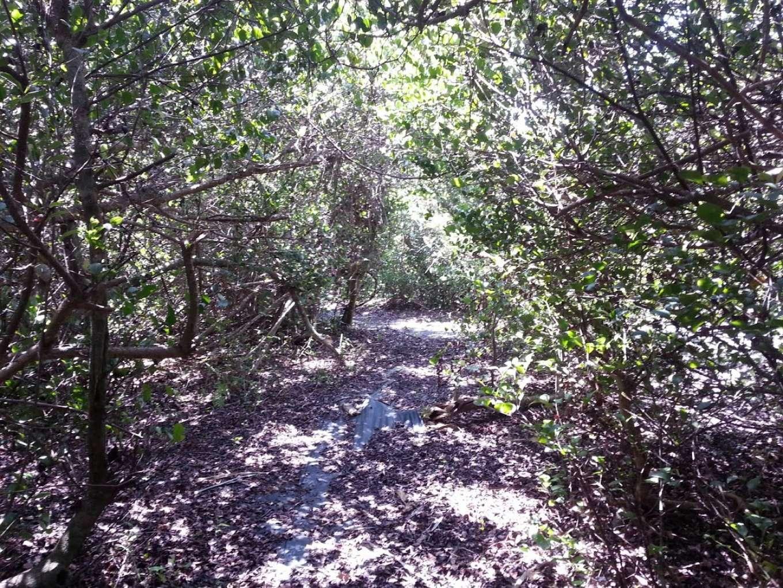 фото Everglades Island